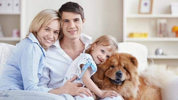 Wills & Trusts dog-young-family Direct Wills Stoke